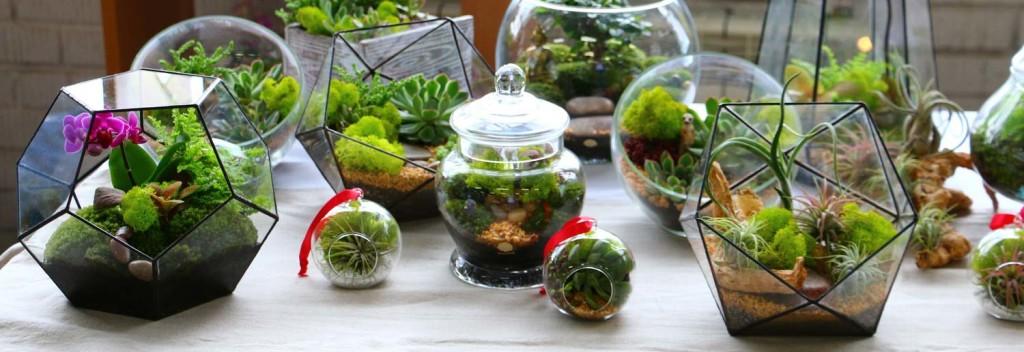 Флоариумы и миниатюрные сады в Минске