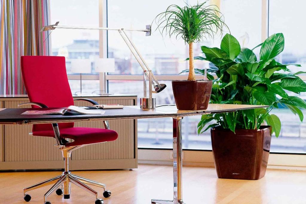 Озеленение офисов в Минске