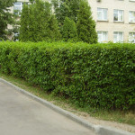 Ландшафтный дизайн в Минске