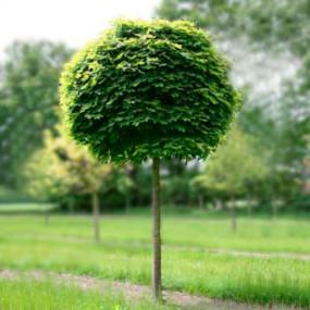 Купить грунтовые растения в Минске