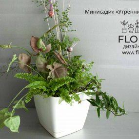 Купить минисадик в Минске